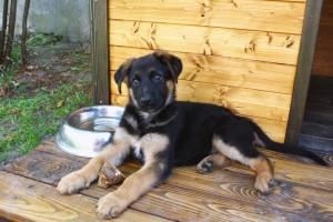 Hundeschule, Hundepension, Hundehütte